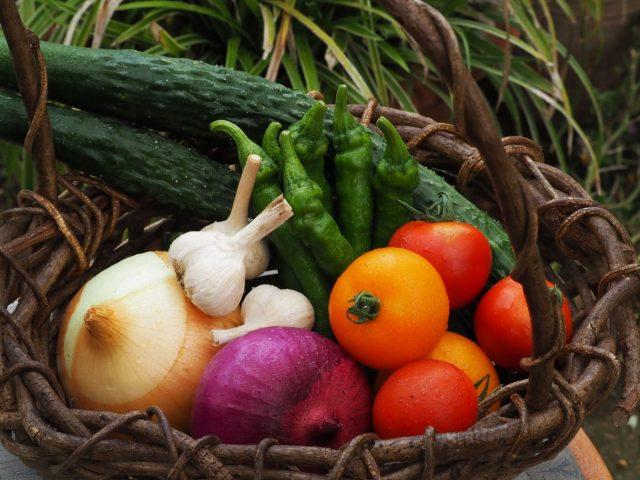 【終了しました】【守谷駅発着専用車付】畑で有機野菜を知ろう!サンマルツァーノトマトとバジルの食体験ツアー