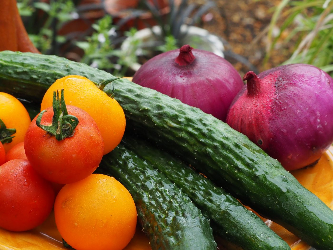 アグリ古柿土、野菜