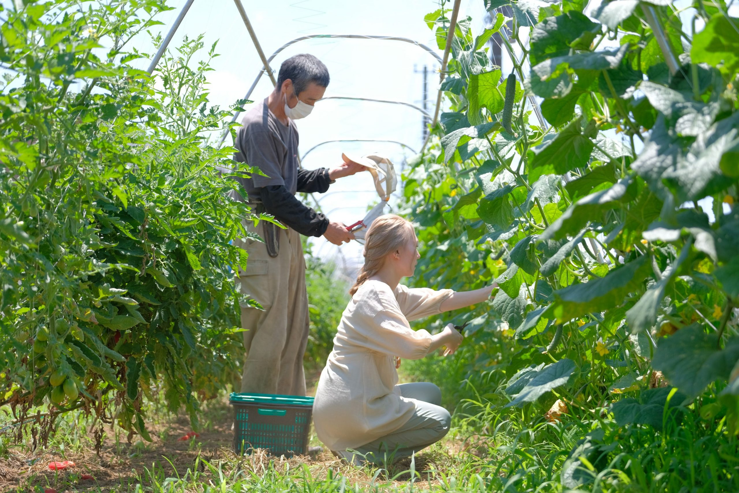 アグリ古柿土、守谷市